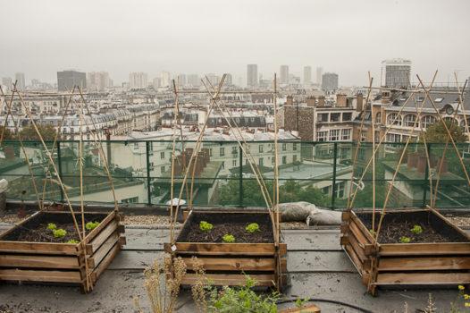 Paris lance des permis pour « végétaliser » tout ce que vous voulez